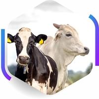 Imagem da capa - Software SuperCrac Bovinos 4.9